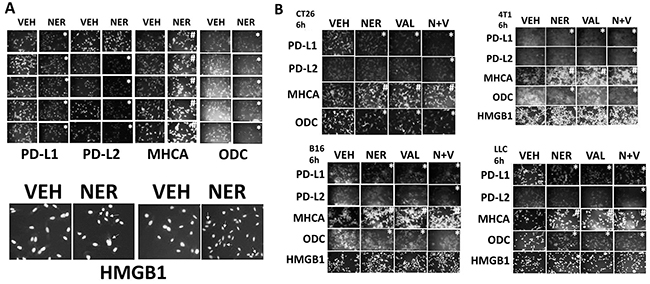 Neratinib regulates the expression of immunotherapy biomarkers.
