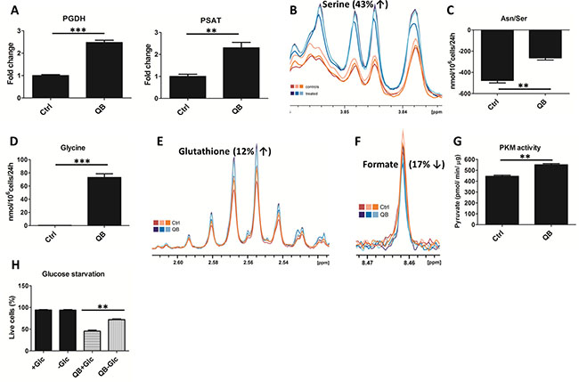 Effect of Quambalarine B (QB) on serine-glycine synthesis pathway.