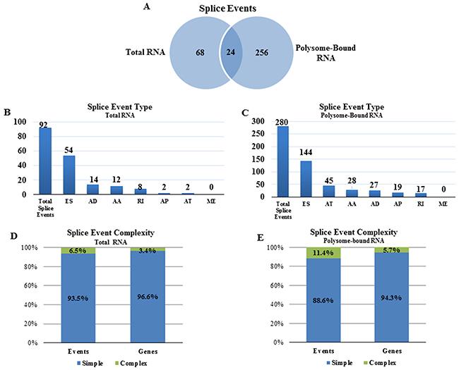Radiation-induced alternative splice events in the transcriptome and the translatome.