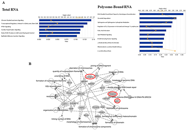 Functional analyses of radiation-induced alternative transcripts.