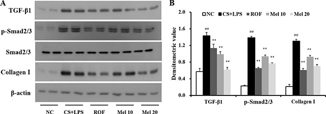 Melatonin reduces TGF-β1/SMAD3 signaling induced by cigarette smoke and LPS exposure.
