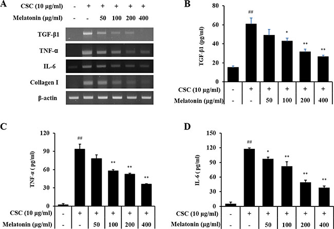 Melatonin inhibits the expression of TGF-β1, TNF-α, IL-6, and collagen I in H292 cells stimulated with cigarette smoke condensate (CSC).