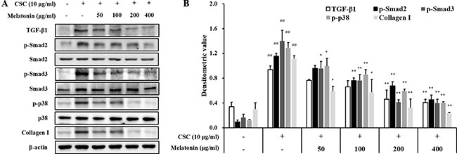 Melatonin decreases the expression of TGF-β1 and collagen I and phosphorylation of SMAD2/3 and p38 in H292 cells stimulated with cigarette smoke condensate (CSC).