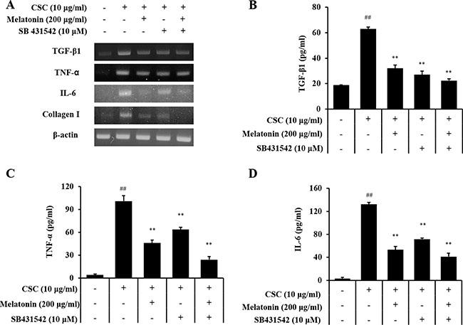 Melatonin suppresses the production of profibrotic mediators induced by CSC stimulation via down-regulation of TGF-β1.