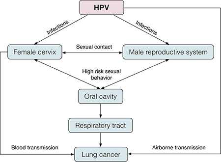 The pathogenesis of HPV infection in thoracic visceral lungs.