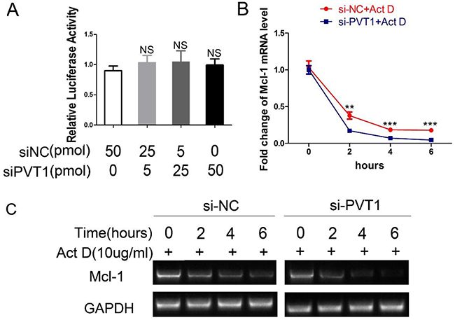 PVT1 decreases Mcl-1 mRNA stability instead of its transcriptional activity.