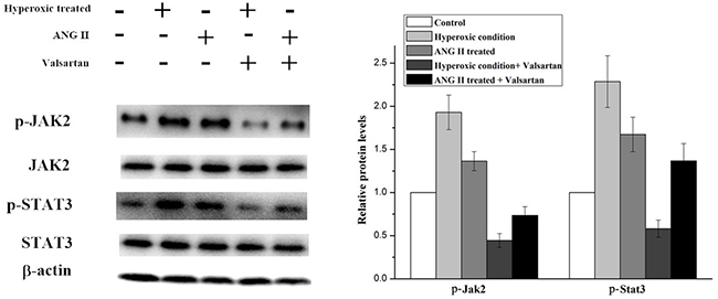 Western blot analysis on the p-Jak2 and p-Stat3 expression level in A549 cells with different treatments.