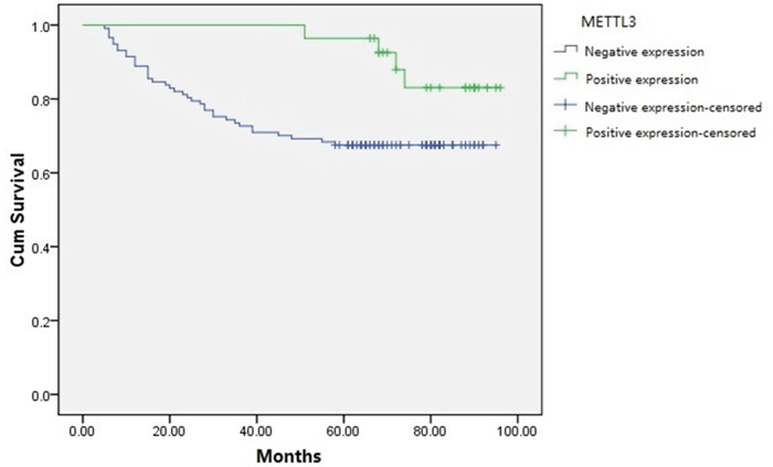 Kaplan-Meier survival curves of RCC patients based on METTL3 expression levels.