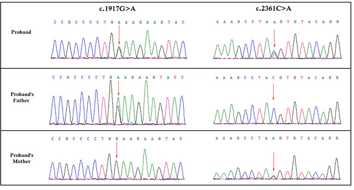 Partial DNA sequences in the