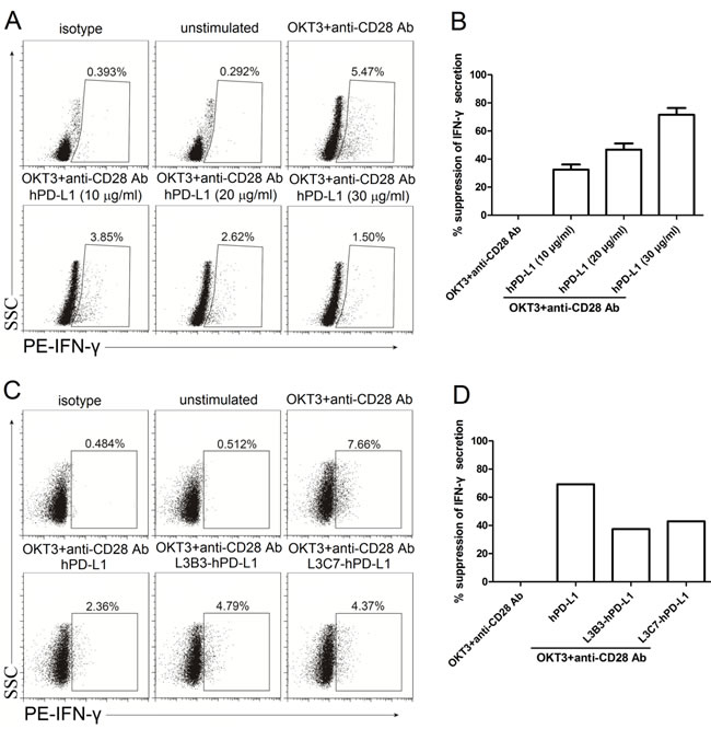 The inhibited IFN-γ secretion of high affinity hPD-L1 variants/hPD-1 interaction was decreased.