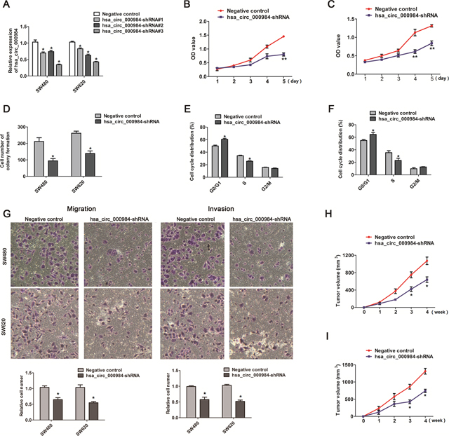 The effect of hsa_circ_000984 on cell proliferation, migration, invasion and tumor formation.