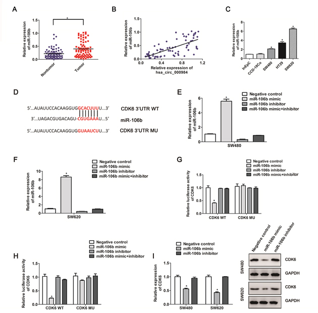 The correlation between CDK6 expression and miR-106b in CRC cells.