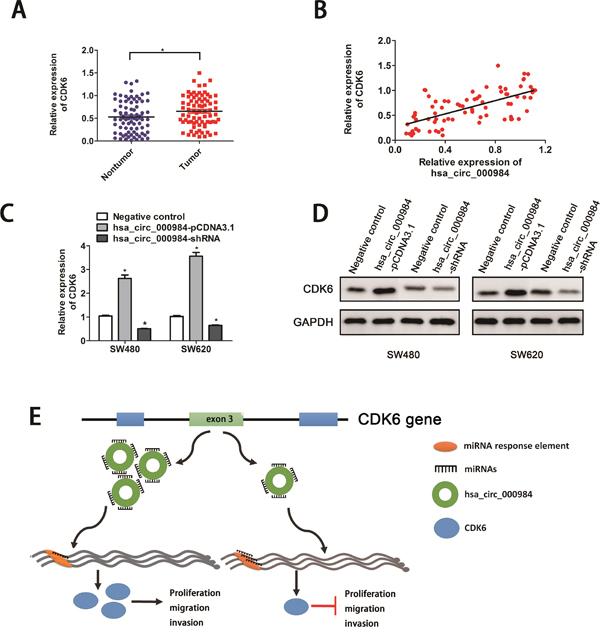 Hsa_circ_000984 may serve as miR-106b sponge to regulate its circRNA-miRNA-mRNA network.