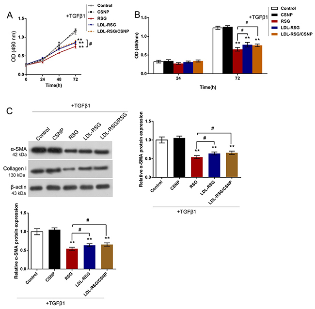 The effects of LDL-RSG/CSNP on TGF-β1-induced HTF proliferation and ECM synthesis.