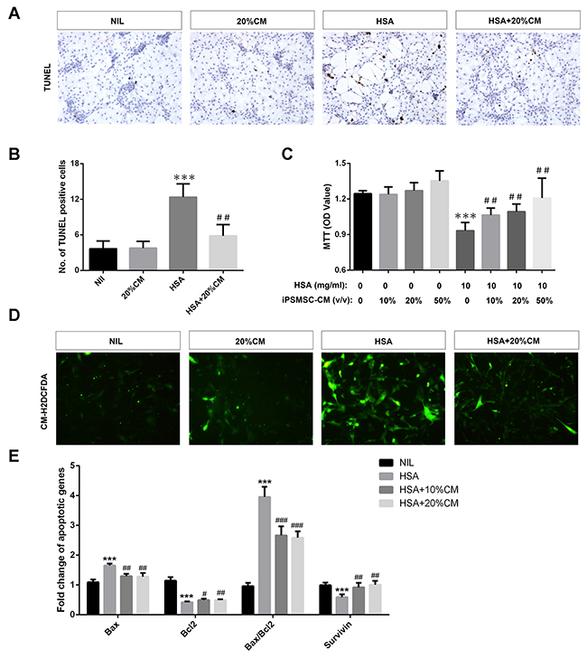 iPS-MSCs reduced apoptosis, potentiated proliferation and attenuated oxidative stress in albumin overloaded PTECs.