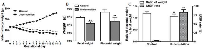 Developmental parameters of rats under prenatal maternal undernutrition.
