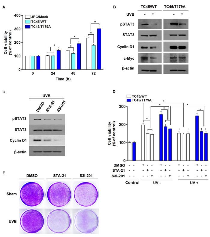 Inhibition of TC45 nuclear translocation promotes UVB-induced keratinocyte proliferation