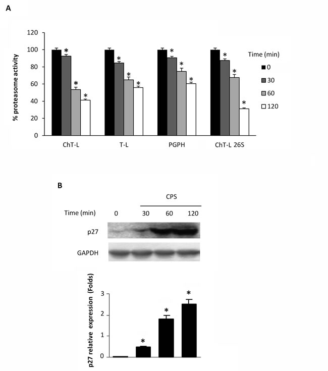 CPS inhibits cellular proteasome activity.