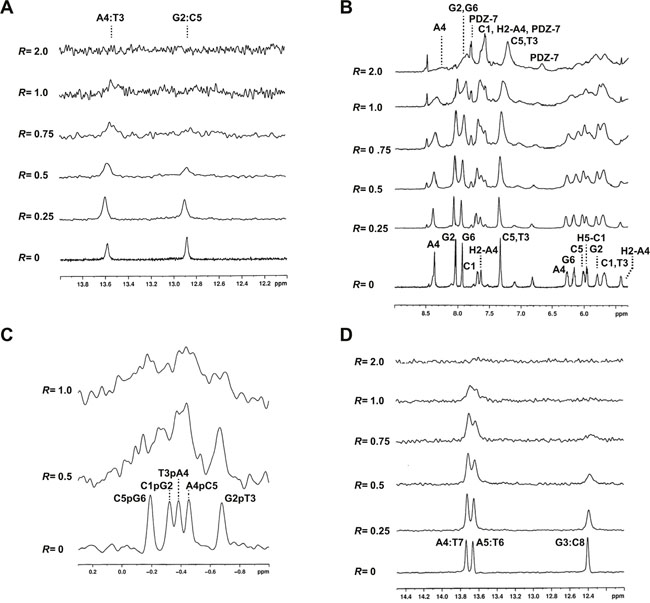 PDZ-7 does not bind DNA by intercalation.