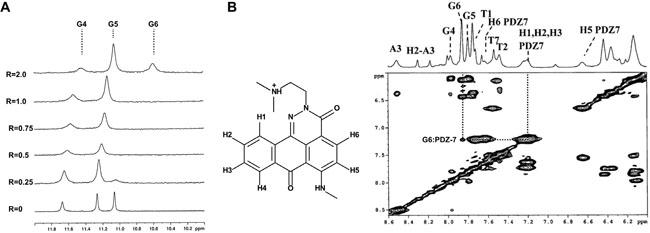 PDZ-7 binds duplex and quadruplex (G4) DNA.