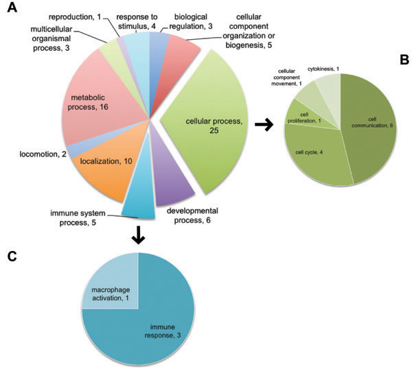 Using top 50 genes selected by Machine Learning, PANTHER identified GOs of cell cycle and cell proliferation affected by L2 expression.