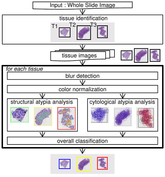 Structure of the automated colorectal classification scheme