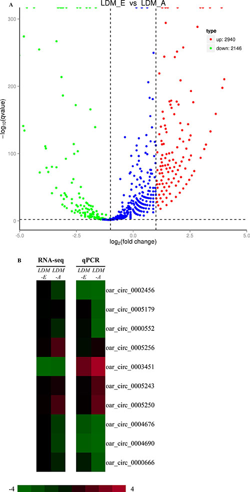 Analysis and validation of differentially expressed circRNAsin LDM_E and LDM_A group.
