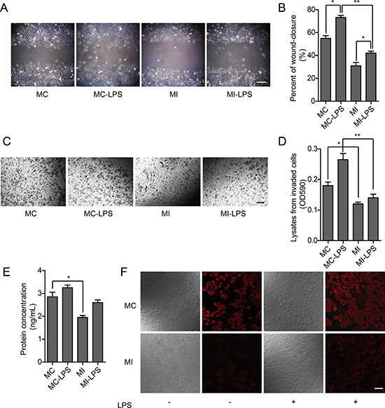 Oncotarget | Osteopontin is involved in TLR4 pathway