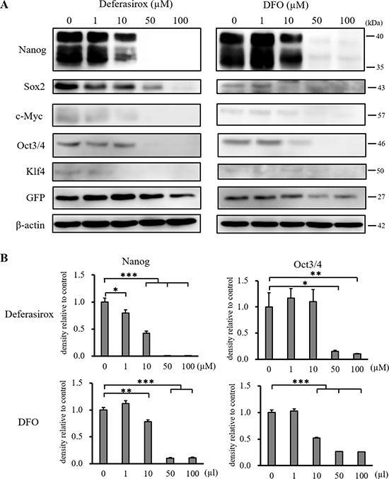 Western blot analysis of stemness marker expression in miPS-LLCcm cells.