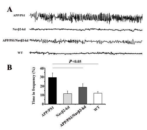 Navβ2 knockdown reversed aberrant neuronal activity in APP/PS1 mice.