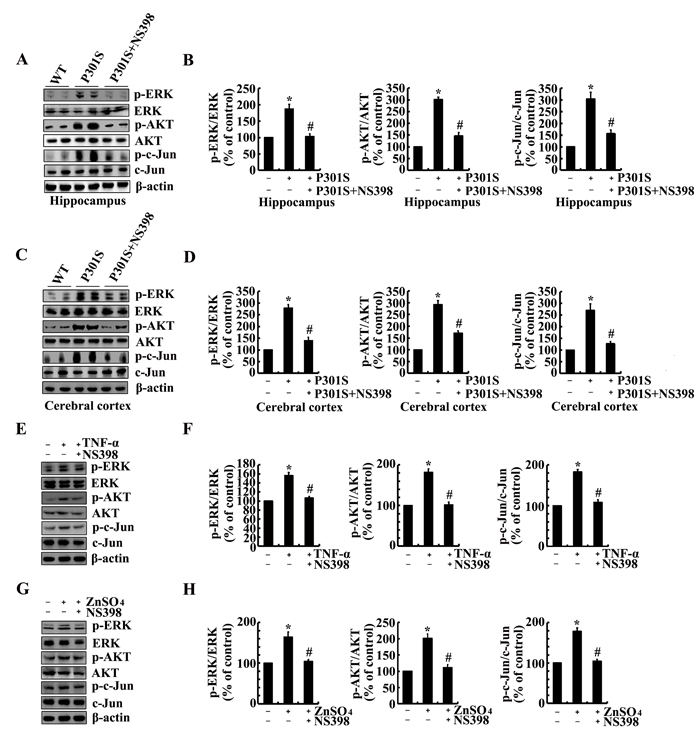 NS398 treatment decreases the activity of PI3-K/AKT, ERK1/2 and JNK/c-Jun pathways in 6-month-old Tau