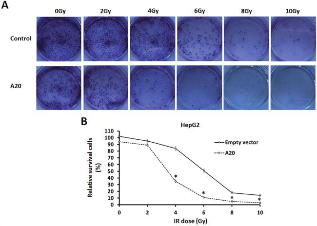 Oncotarget A20 Enhances The Radiosensitivity Of