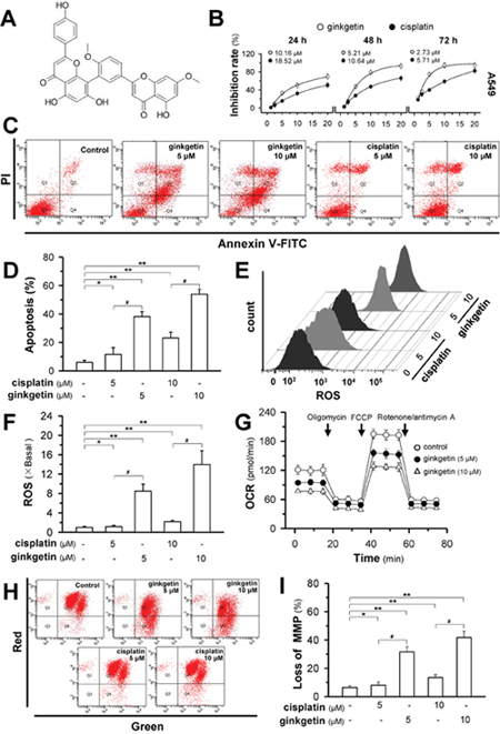 Ginkgetin induces cell death and mitochondria disruption in non-small cell lung cancer.