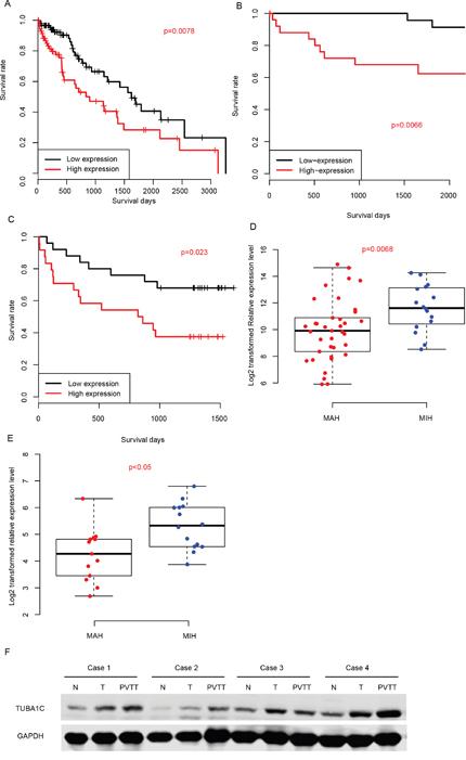 Prognostic effect of TUBA1C.