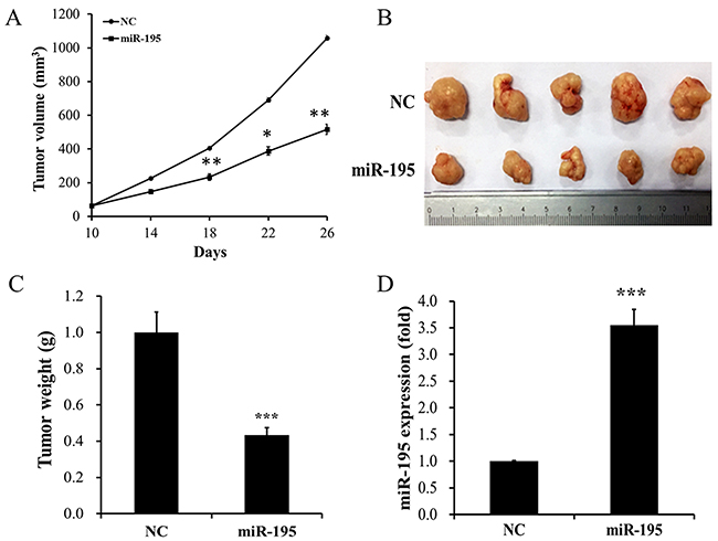 MiR-195 showed a visible inhibitory impact on tumor growth in vivo.