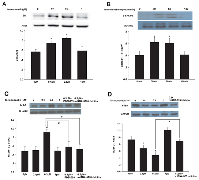 Effect of formononetin on ERα, p-ERK1/2, bcl-2 and PTEN protein expression in CNE2 cells.