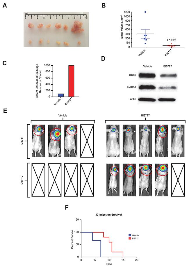 In Vivo efficacy of BI6727 in pediatric ATRT mouse xenografts: decreased tumor burden and increased survival.