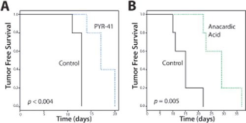 Tumor-free Survival (TFS) of Mice with SUMO Inhibitors.