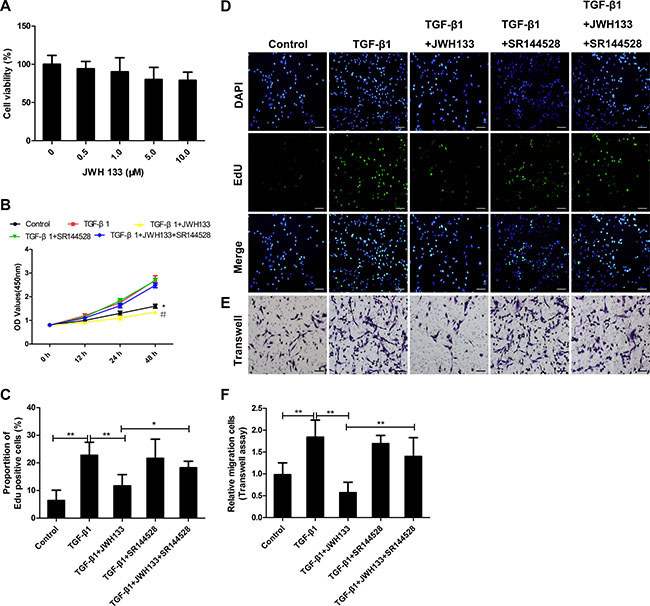 CB2R agonist JWH133 inhibited TGF-β1 induced mice lung fibroblasts proliferation and migration.