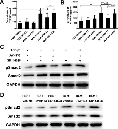 CB2R agonist JWH133 reduced the serum levels of profibrotic cytokines TGF-β1 in pulmonary fibrosis mice and decreased expression of Smad2 phosphorylation in vitro and in vivo.