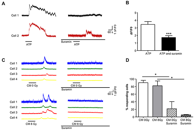 Purinergic receptor mediated bystander effects evoke Ca2+-transients in T24 cells.