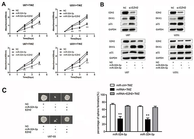 MiR-524-5p and miR-324-5p increases TMZ chemosensitivity in glioma.