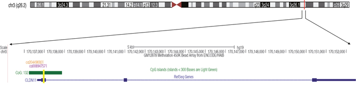 The tested fragment of CLDN11 promoter region.