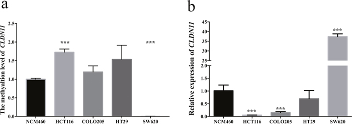 Analysis of CLDN11 methylation and expression in CRC cell lines and normal colon cell line.