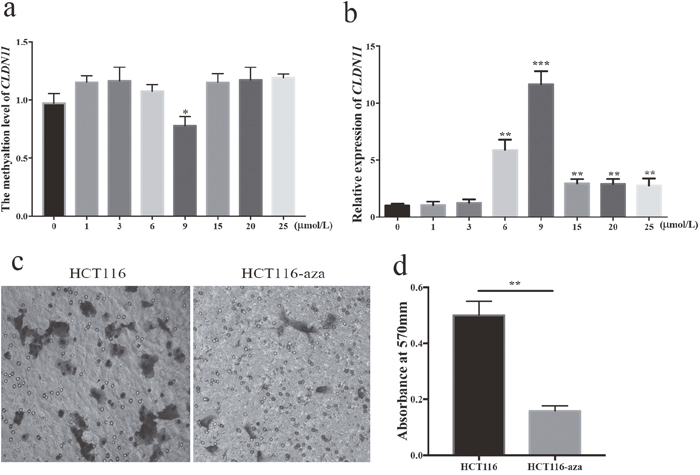 Association of CLDN11 methylation with CRC cell migration.