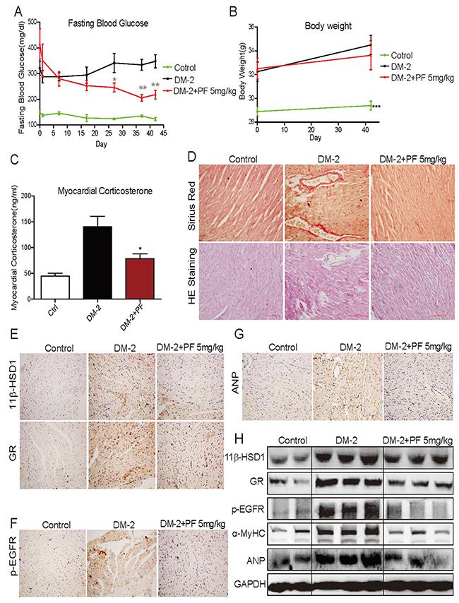 11β-HSD1 inhibitor PF-915275 lowered serum glucose levels and reduced pathological cardiac changes in a type 2 model of diabetes.