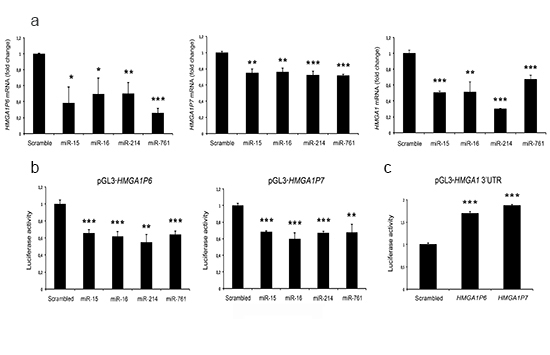 HMGA1P6 and HMGA1P7 are targeted by HMGA1-targeting miRNAs.