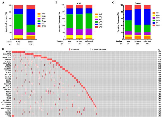Genomic variations in the CNC samples.