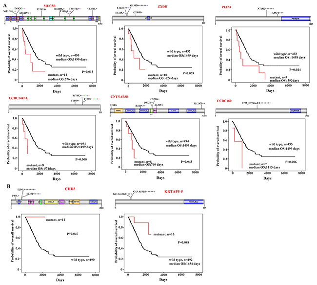 CNC variations associated with prognosis of the patients.