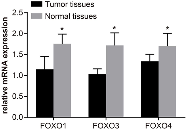 The mRNA expression levels of FOXOs in bladder cancer tissue and paracancerous tissue, determined by quantitative real-time polymerase chain reaction (qRT-PCR).